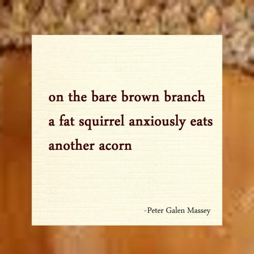 squirrel winter haiku massey