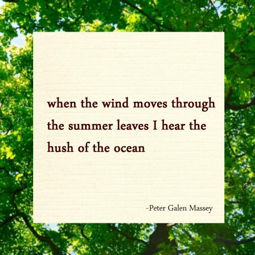 haiku summer leaves peter massey