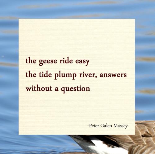 the geese ride easy Haiku Massey