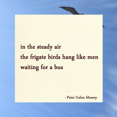 Frigate Birds Hang in The Steady Air - Jamaica Haiku Peter Massey