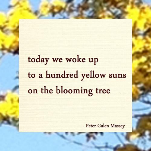 Hundred Yellow Suns Haiku Peter Galen Massey