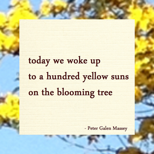 Hundred Yellow Suns Haiku Peter Galen Massey