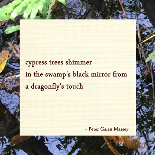 Black Mirror of the Swamp Haiku Peter Galen Massey