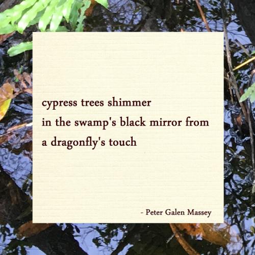 Black Mirror of the Swamp Haiku Peter Galen Massey