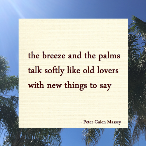 The Breeze and The Palms Haiku Peter Galen Massey