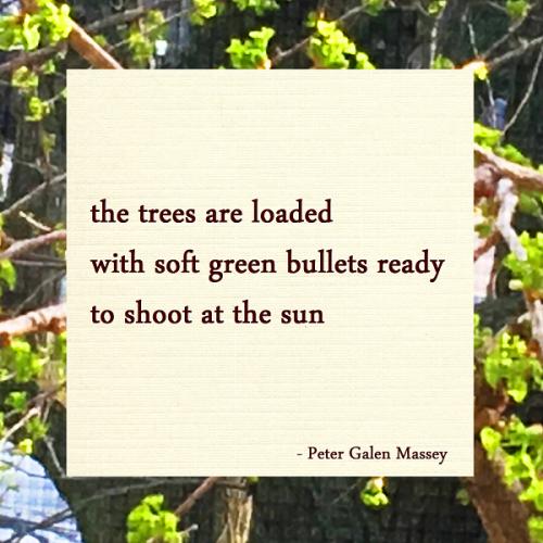 Soft Green Bullets Haiku Peter Galen Massey