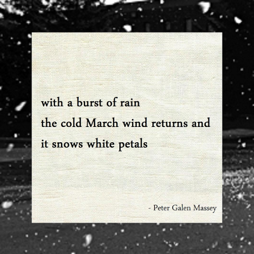 Snows White Petals Haiku Peter Galen Massey