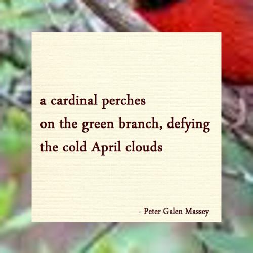 Haiku Cardinal Defies Snow Peter Massey