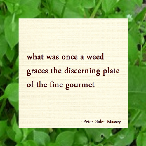 Haiku Peter Galen Massey Gourmet Weeds