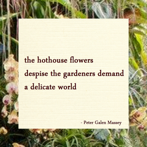 Haiku Peter Galen Massey The Hothouse Flowers
