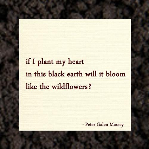 Haiku Peter Galen Massey Plant My Heart