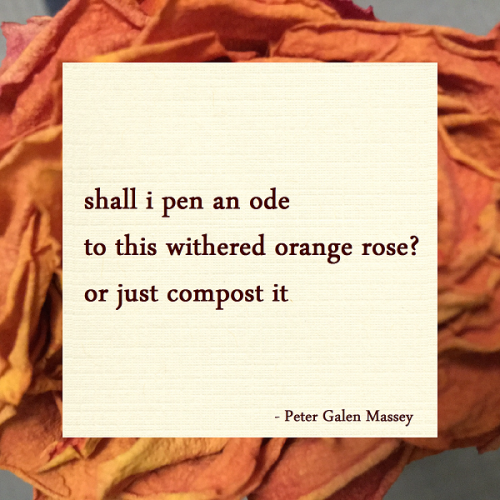 Haiku Peter Galen Massey Ode to a Withered Rose