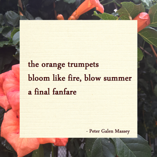 Haiku Peter Galen Massey Bloom Like Fire