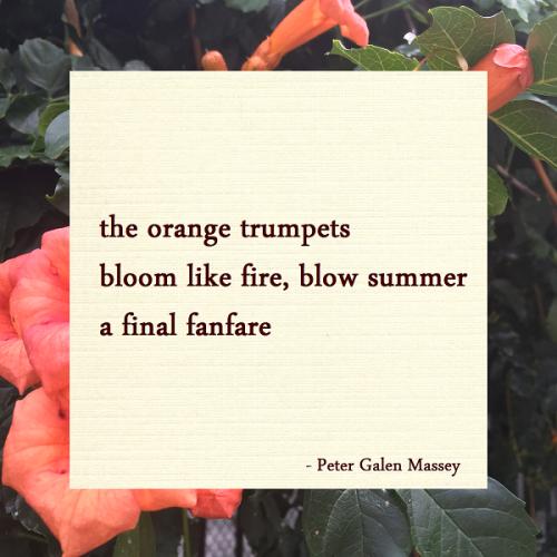 Haiku Peter Galen Massey Bloom Like Fire