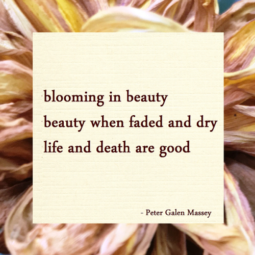 peter galen massey haiku blooming in beauty / beauty when faded and dry / life and death are good