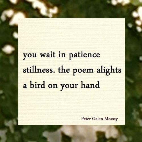 Peter Galen Massey Haiku The Poem Alights Like a Bird