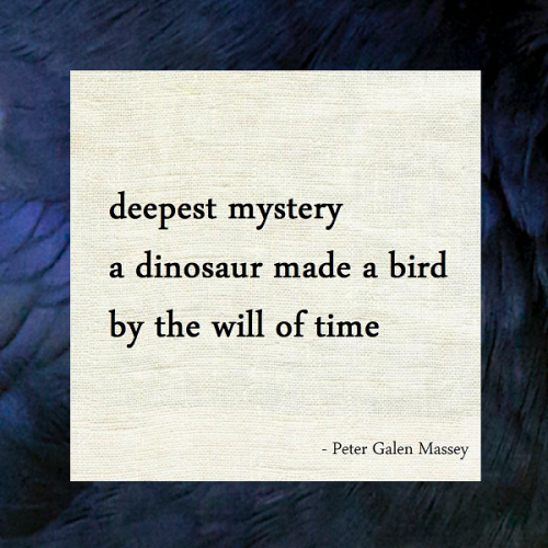 "Haiku ""a dinosaur made a bird"" Peter Galen Massey"
