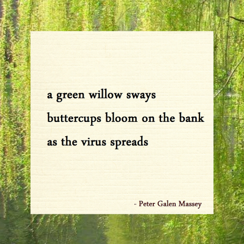 Haiku a green willow sways buttercups bloom on the bank as the virus spreads
